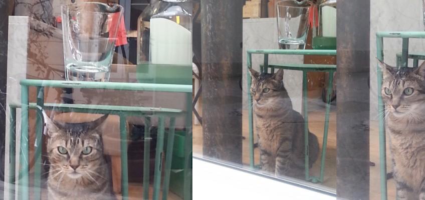 Katt i Paris